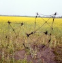 yellow series 4